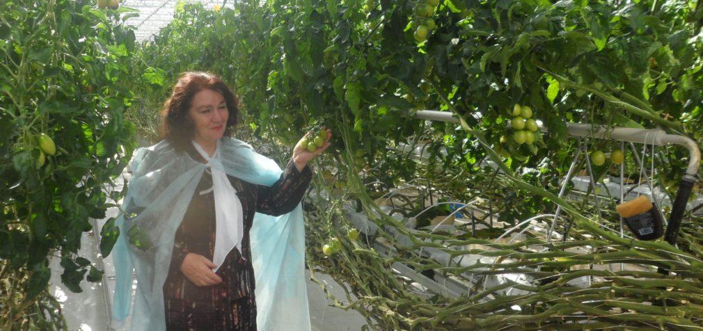 Ленинградская область пожинает урожай