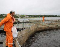 О рыбаках, рыбоводах и рыбках
