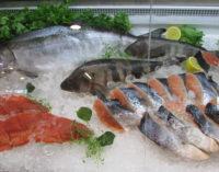 С думой о рыбе и не только о ней