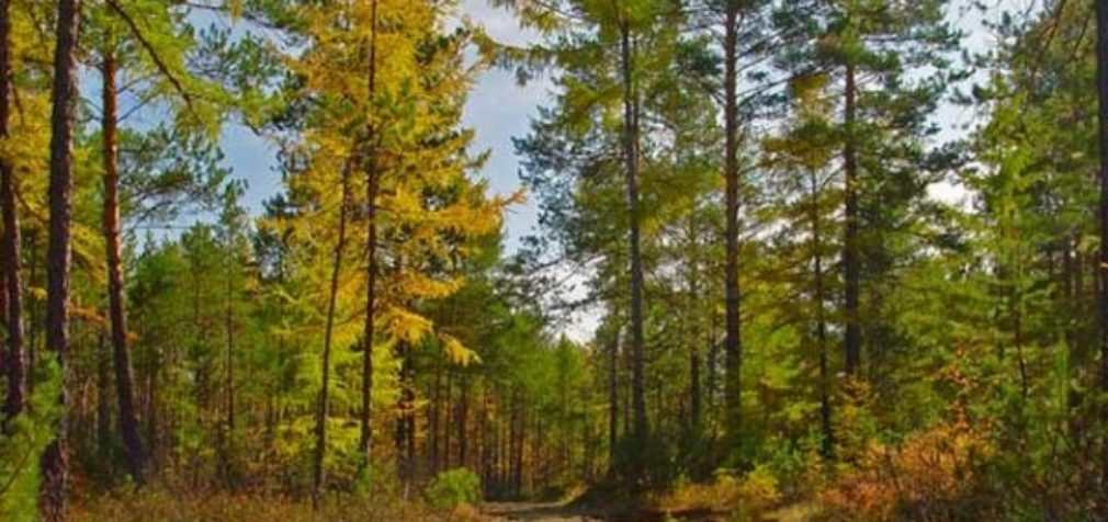 Экологические будни Ленинградской области