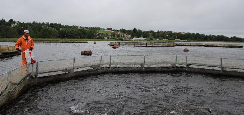 Ленинградская креветка поможет создать новые рабочие места