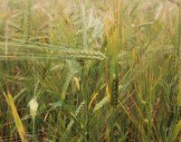 Высокая культура земледелия и социального партнерства