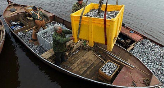 Рыбаки 47-го региона: главная проблема — низкие зарплаты