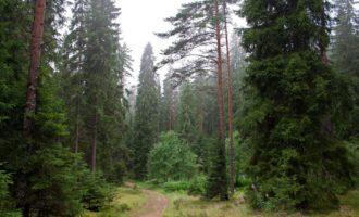 Здоровье лесов Ленинградской области