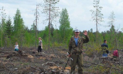 Нацпроект «Экология»: восстановить лес, очистить воду