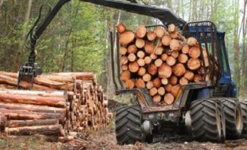 О лесных богатствах и людях труда