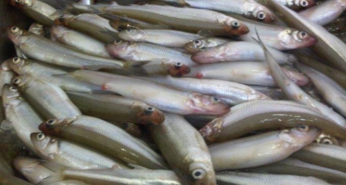 Профсоюз: рыбакам — места для торговли, горожанам — дешевую корюшку