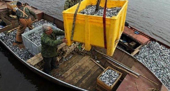 Рыбаки –в море, охранники – на защите правопорядка