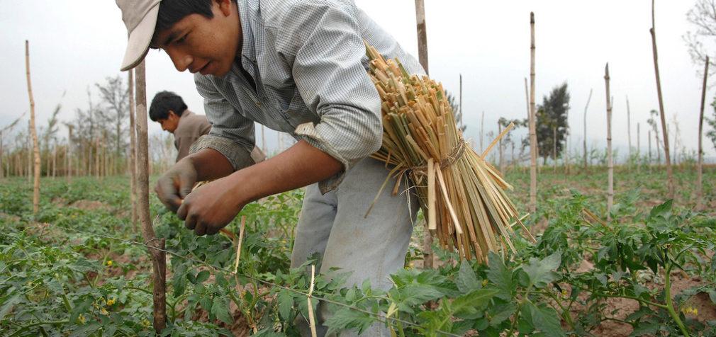 IUF: Защитить сельскохозяйственных работников во время пандемии и вне ее