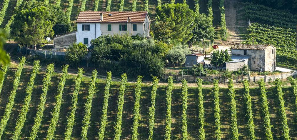 Италия: марокканцы помогут фермерам