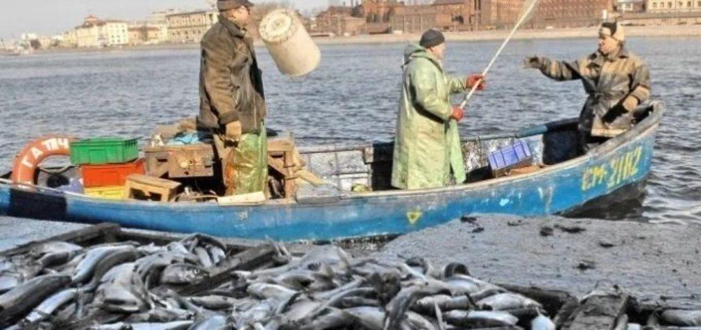 Путина-2020: в выигрыше снова не рыбаки