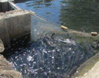 В «рыбный день»: о корюшке, зарплатах и празднике