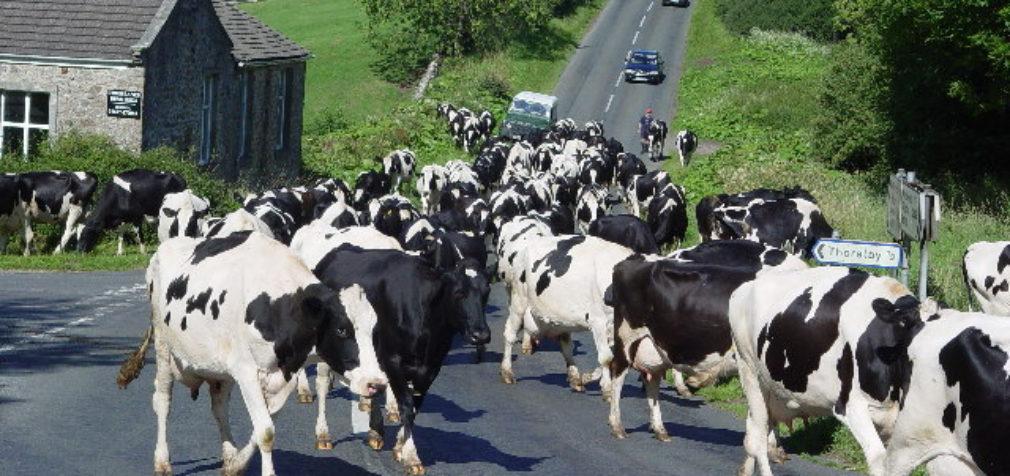 Эстония: сельхозрабочих с Украины депортировали за нарушение карантина