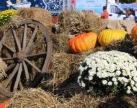 «Агрорусь-2020»: День Ленинградской области был самым ярким, красочным