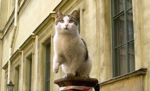 Музейных котов объединят в «профсоюз»