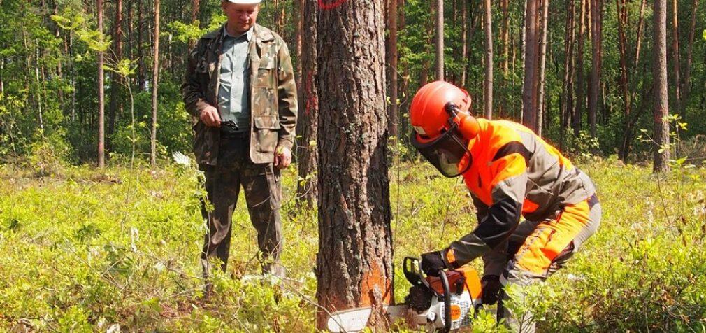 В лесу и в цехах – ситуация стабильная!